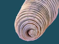 Earthworm, sem Stock Photos