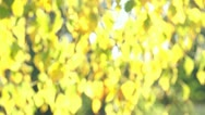 Stock Video Footage of Blurry Autumn Leaf Background