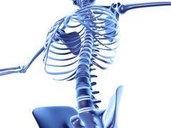 Torso bones, computer artwork Stock Illustration