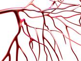 Stock Illustration of arteries, computer artwork