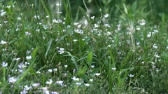 Small flowers in high grass Stock Footage