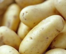 new potatoes - stock photo