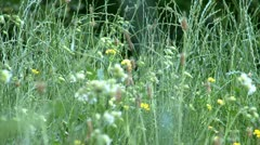 High grass and flowers Stock Footage