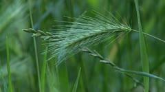 High grass, close up Stock Footage