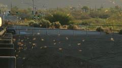 City Bats - stock footage