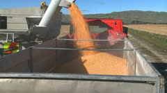 Corn loading into truck time lapse Stock Footage