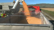 Stock Video Footage of corn loading into truck time lapse