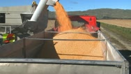 Stock Video Footage of corn loaded into truck