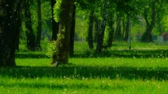 Park in the Zagreb capital of Croatia. Crow walking. Stock Footage