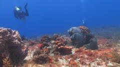 2 divers,2 angelfish Stock Footage