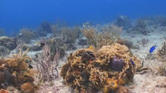 colorful reef, sealife - stock footage