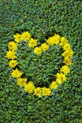 Flowers in a heart shape Stock Photos