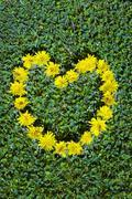 flowers in a heart shape - stock photo