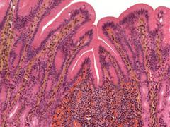 Vatsaontelon, valomikroskooppikuvan Kuvituskuvat