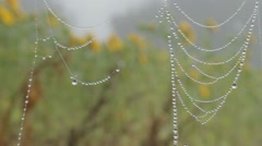 Spider web 2 Stock Footage