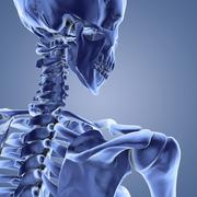 upper body skeleton, computer artwork - stock illustration