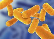 Rod shaped bacillus bacteria Stock Illustration