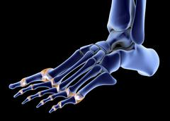 The bones of the foot Stock Illustration