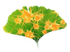 Ginkgo and nerve cells Stock Illustration
