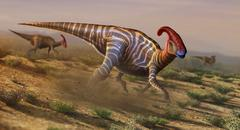 Artwork of parasaurolophus Stock Illustration