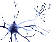 nerve cell - stock illustration