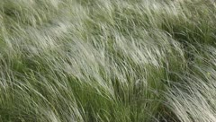 Feather-grass Stock Footage
