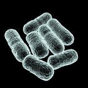 e coli bacteria, artwork - stock illustration