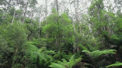 Wide Rainforrest Slow Pan & Tilt to Waterfall Noojee Victoria Australia Stock Footage