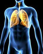 Stock Illustration of human respiratory system, artwork