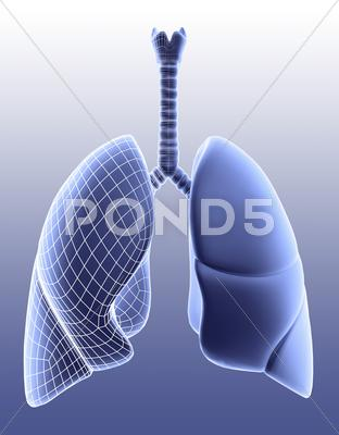Stock Illustration of lungs, artwork
