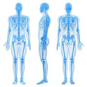 male skeleton, artwork - stock illustration