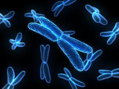 chromosomes, artwork - stock illustration