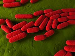 bacillus subtilis bacteria, artwork - stock illustration