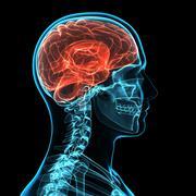 head anatomy, artwork - stock illustration