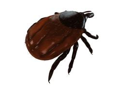 tick, artwork - stock illustration