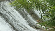 Waterfalls, natural size. Stock Footage