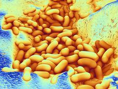 bacteria, artwork - stock illustration