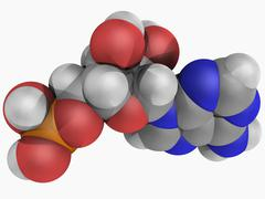 Adenosine monophosphate molecule Stock Illustration