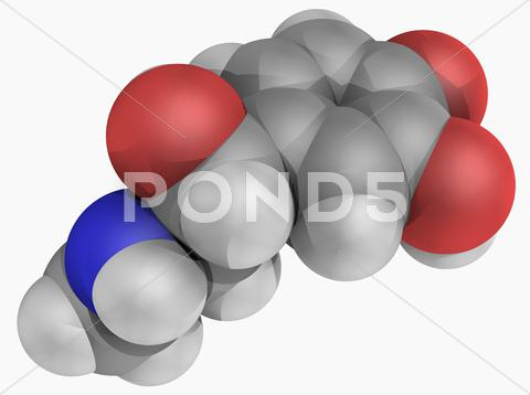 Stock Illustration of epinephrine molecule