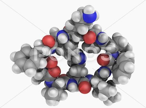 Stock Illustration of gramicidin s drug molecule