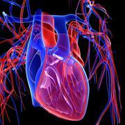 Cardiovascular system, artwork Stock Illustration