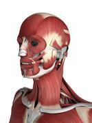 male musculature, artwork - stock illustration