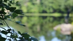 Leaves At The Pond Stock Footage