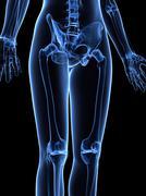 Leg bones, artwork Stock Illustration
