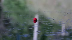 Bobber Centered In Water With Ripples Stock Footage