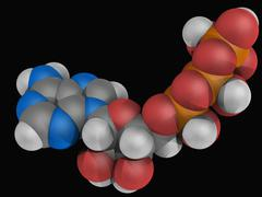 adenosine triphosphate molecule - stock illustration