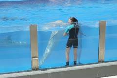 Dolphins show in Marineland, Palma de Mallorca, Spain NTSC Stock Footage