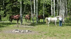 Cowboy with horses in green mountain forest P HD 0322 Stock Footage