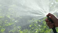Female hand with a hose watering garden plants Stock Footage
