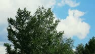 Timelapse with tree and clouds in summer Stock Footage